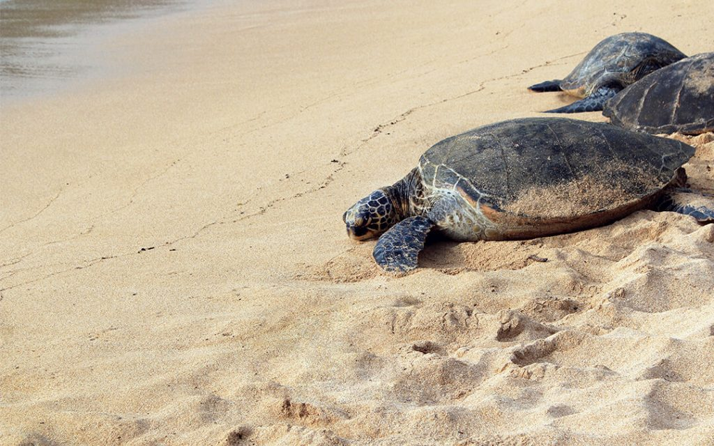 6 Places To See Turtles In Quintana Roo