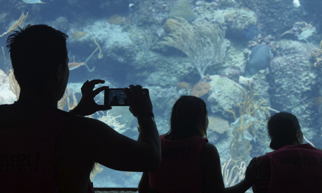 Xcaret Aquarium – All You Need To Know