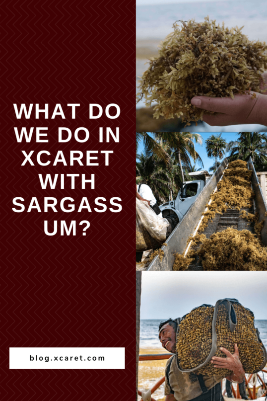 What-do-we-do-in-Xcaret-with-sargassum_-1