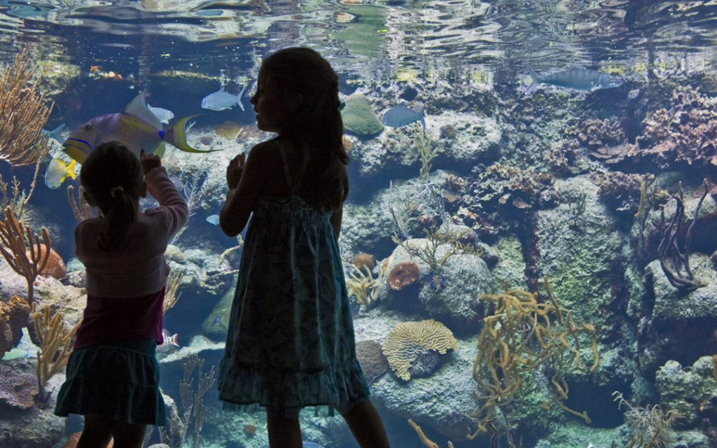 10 things that will amaze your kids in Xcaret