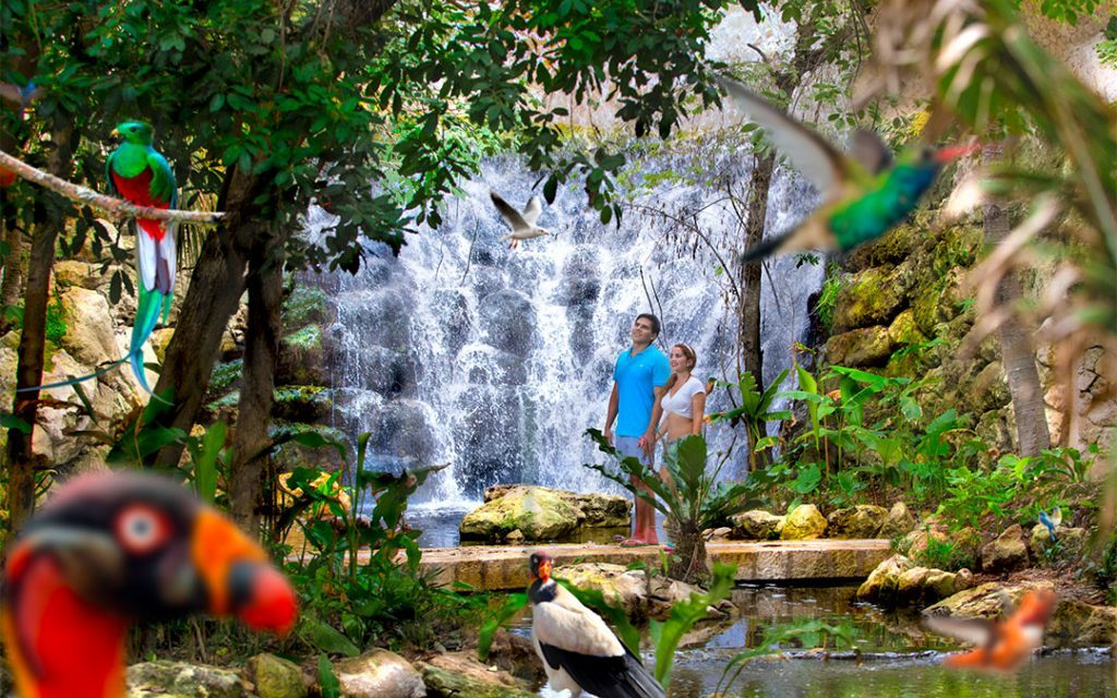10 Birds you can see in the Aviary of Xcaret