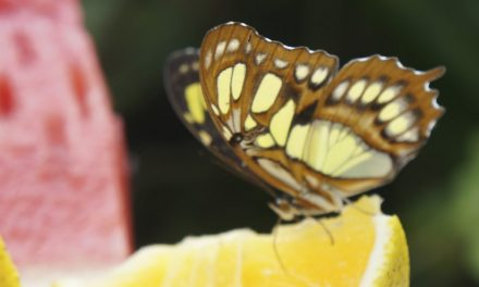 The amazing world of butterflies in Xcaret