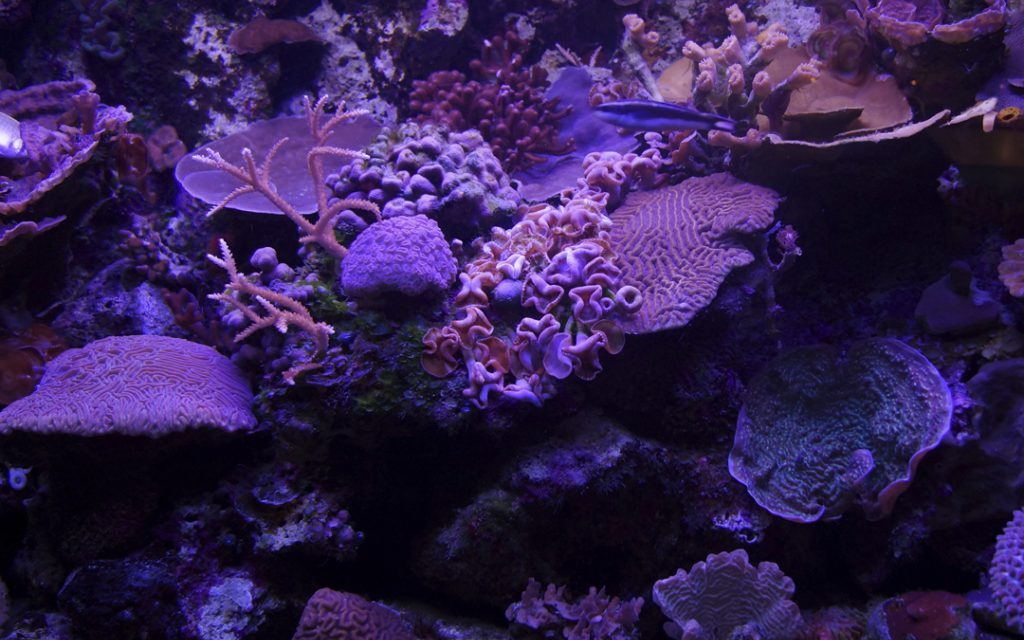 Fluorescent corals: the magic is in the details