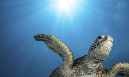 Show your love for sea turtles