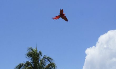 Helping Save The Scarlet Macaw