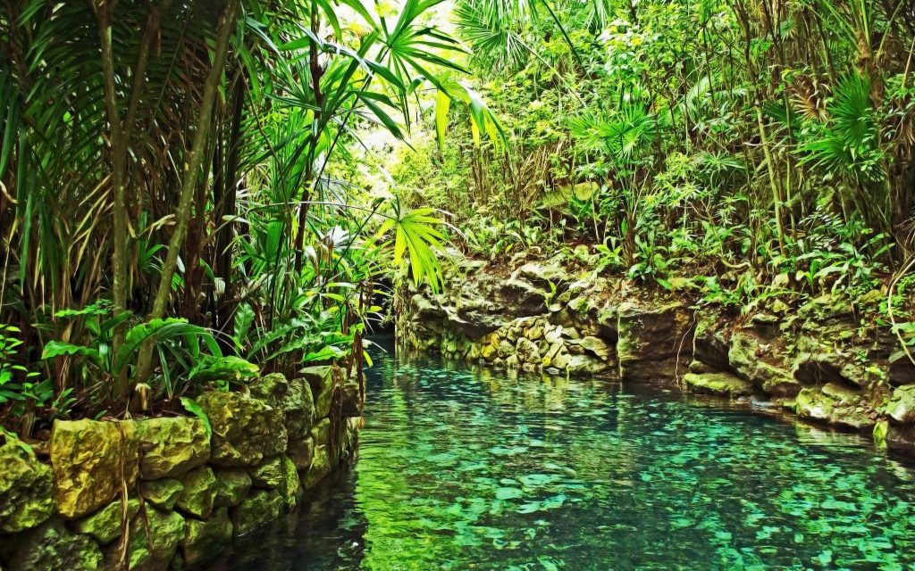 Things you will find while swimming in the rivers of Xcaret