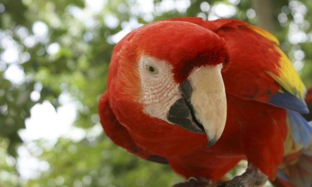 10 Things you didn't know about Xcaret's macaws
