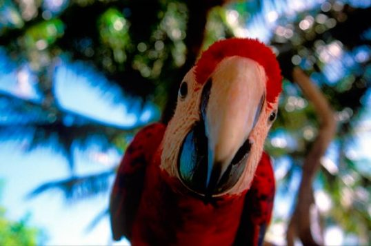 Discover Xcaret's new treasure: The Aviary