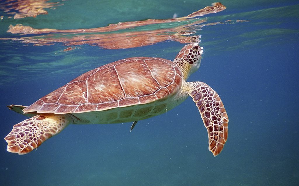 Six actions you can do to save the turtles