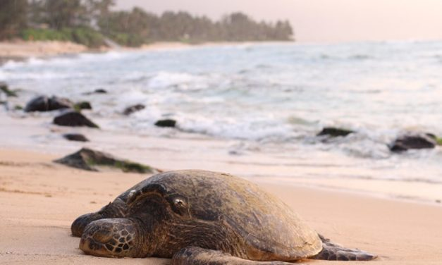 7 ways to help sea turtles from your home