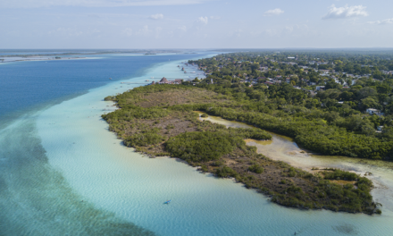 Guide to enjoy a vacation in the Mexican Caribbean without sargassum