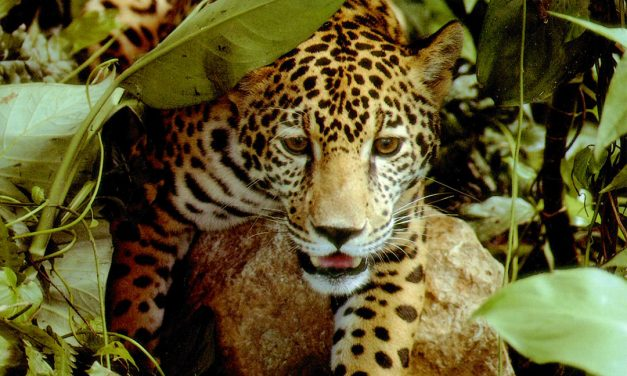 Sacred animals in the Mayan culture