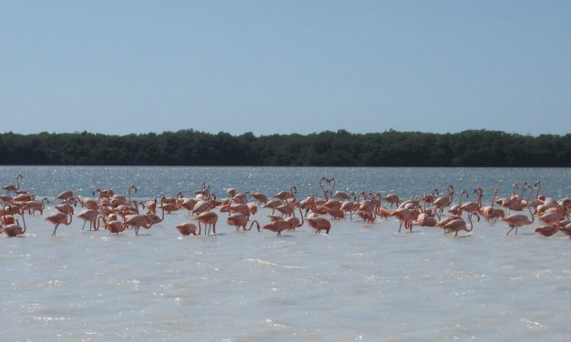 6 places in Yucatan you have to visit in summer