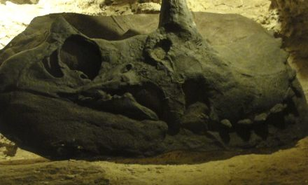 Dinosaurs In Mexico: Did They Exist?