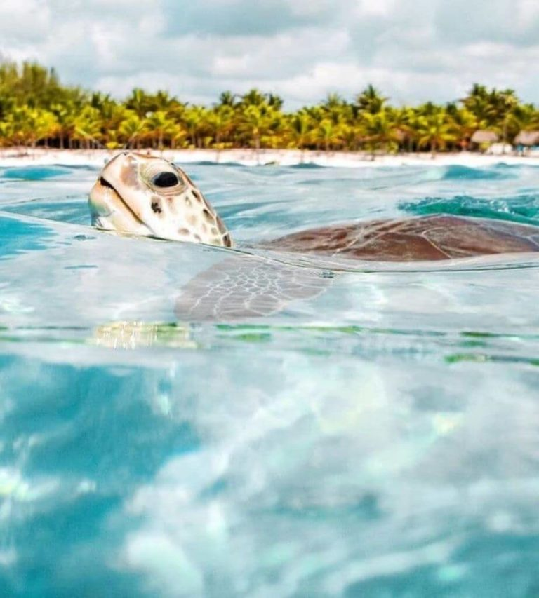 Top 10 most emblematic places of the Riviera Maya-turtle-swimming