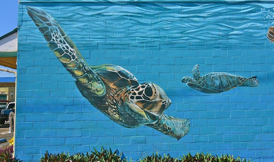 Turtles: an inspiration for the mind