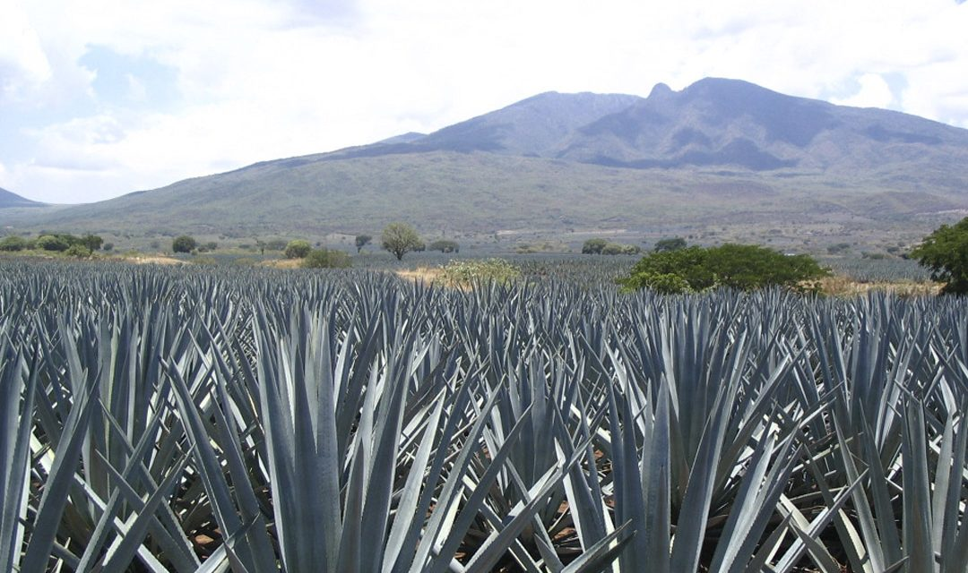 Differences Between Tequila And Mezcal