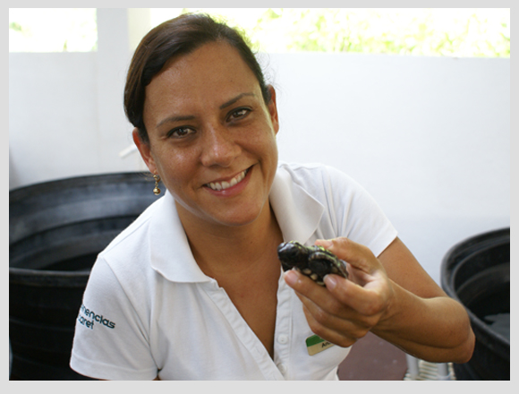 sea turtle hospital in Xcaret