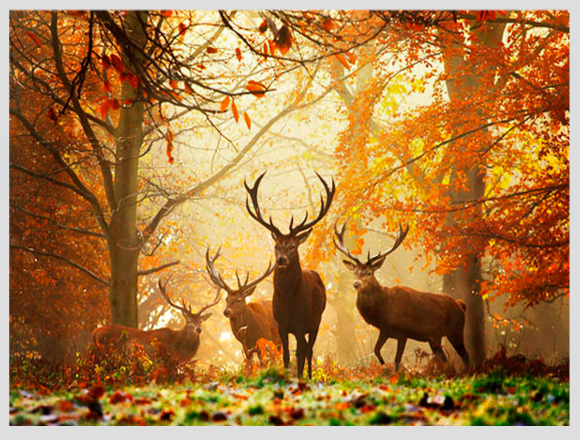 deers-in-forest