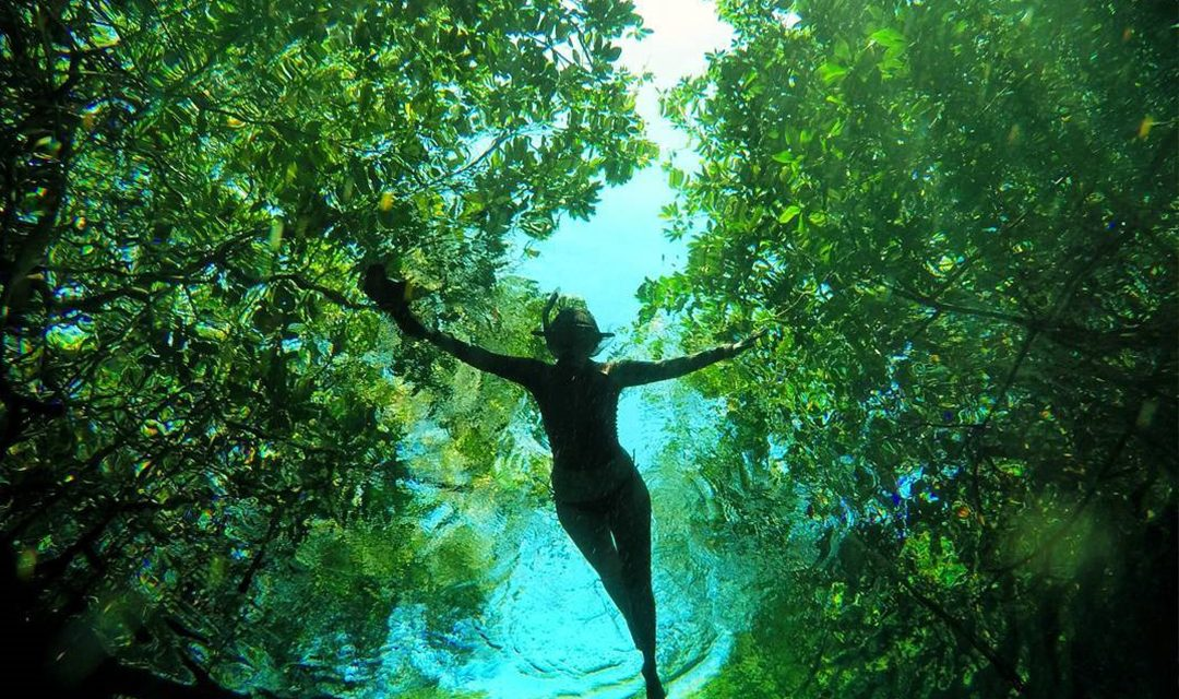 Photos that will make you want to go swimming in a cenote