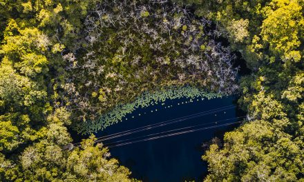 6 Things you should know about cenotes