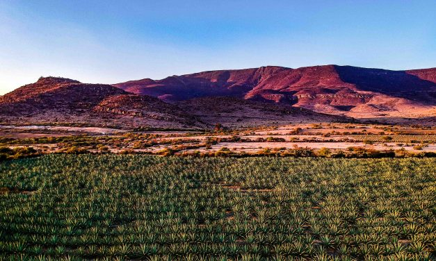 Mezcal, a Mexican beverage with a lot of history