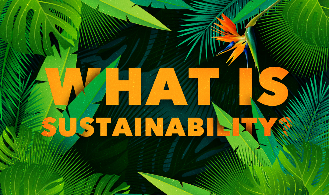 What is sustainability and how to apply it to my daily life