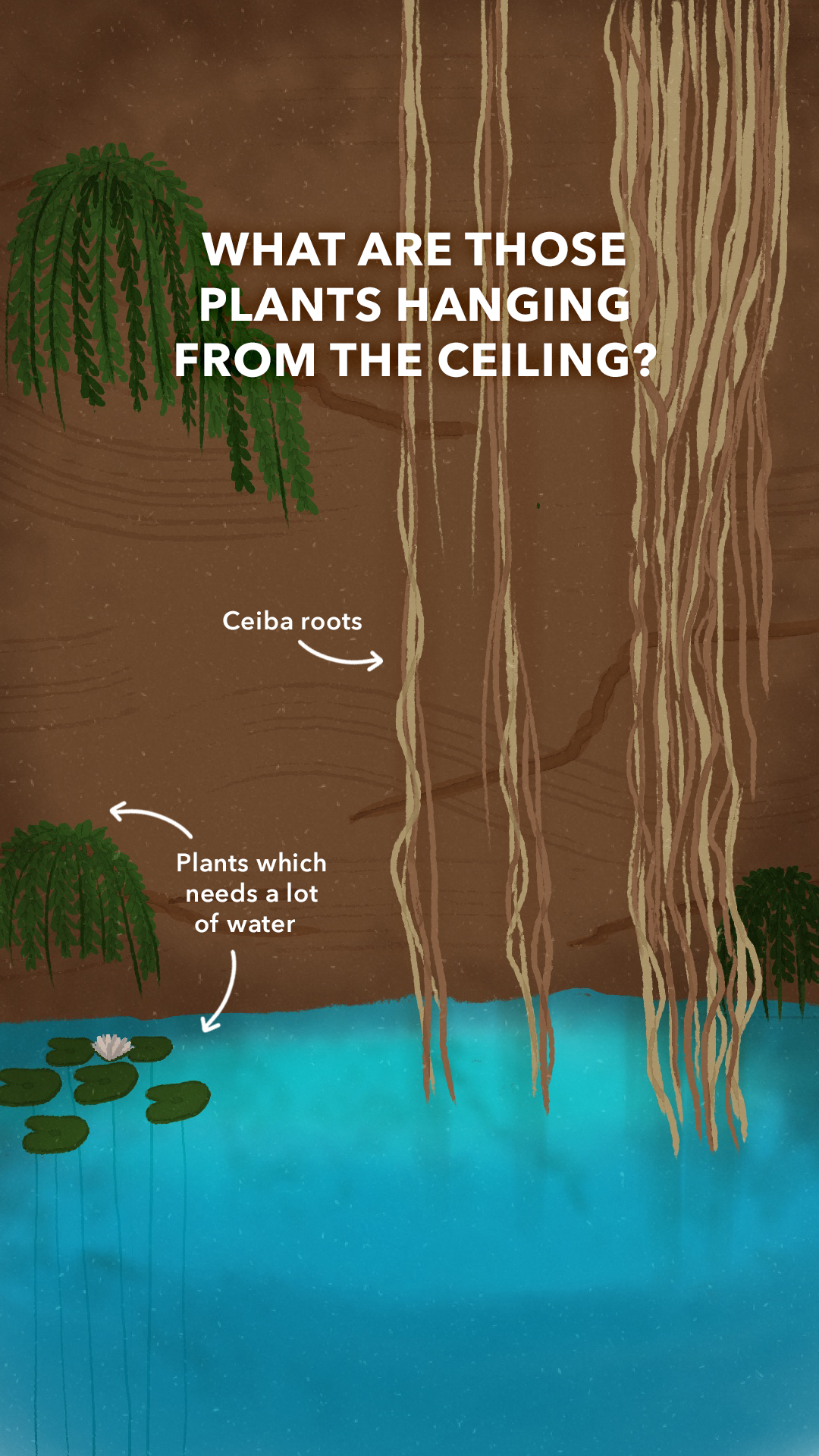 What are all those plants hanging from the ceiling?