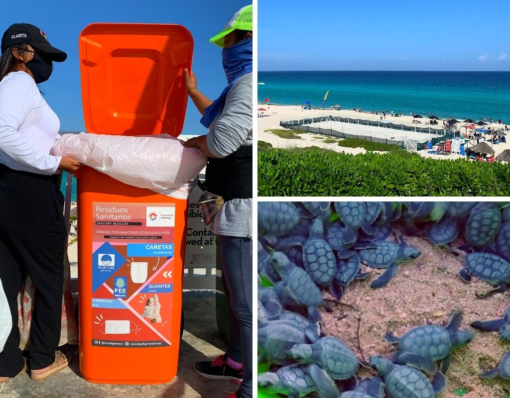 reopening-of-beaches-in-Cancun-turtle-hatching