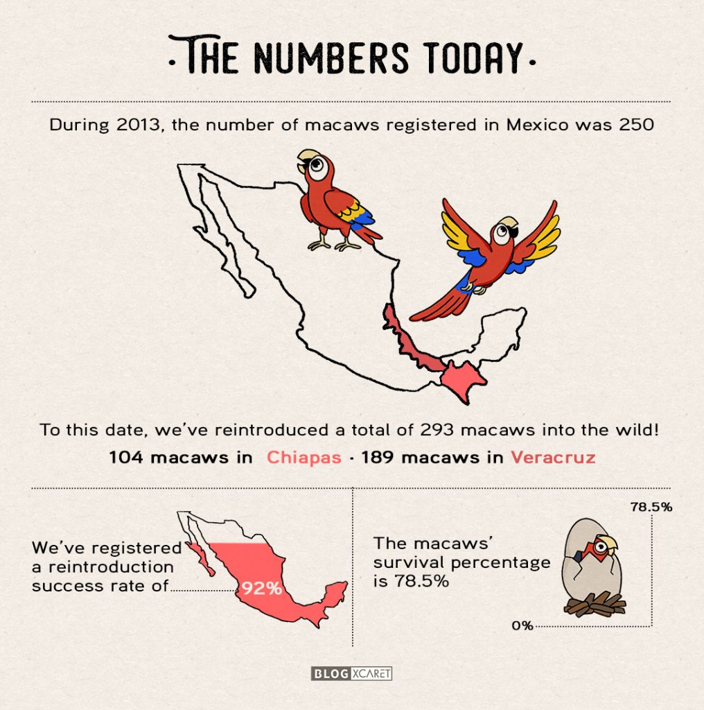 macaw-conservation-xcaret-stats