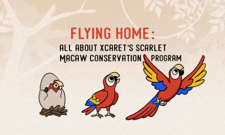 FLYING home: all about the Scarlet Macaw Conservation Program at Xcaret