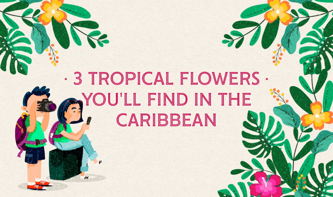 3 Tropical flowers you'll find in the Caribbean