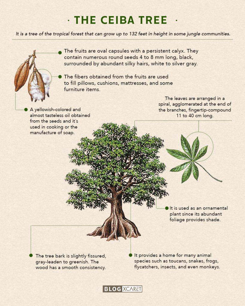 The ceiba:  sacred tree of the Maya