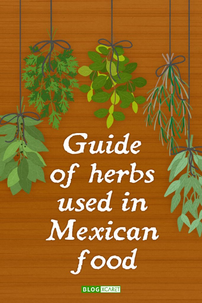 Guide of herbs used in Mexican food Pinterest