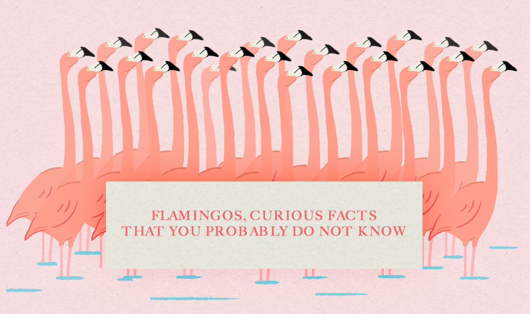 FUN FACTS ABOUT FLAMINGOS THAT YOU PROBABLY DIDN't KNOW