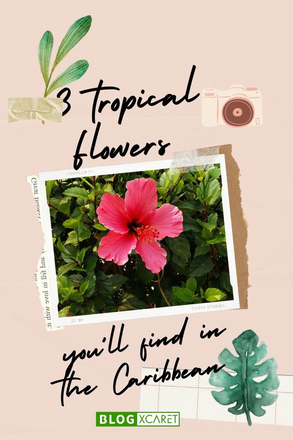 tropical flowers you´ll find in the caribbean vacations