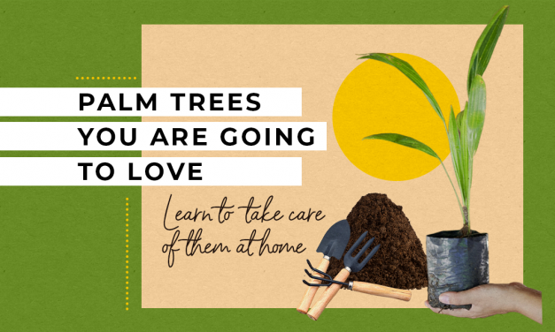 Types of palm trees you are going to love. Learn to take care of them at home