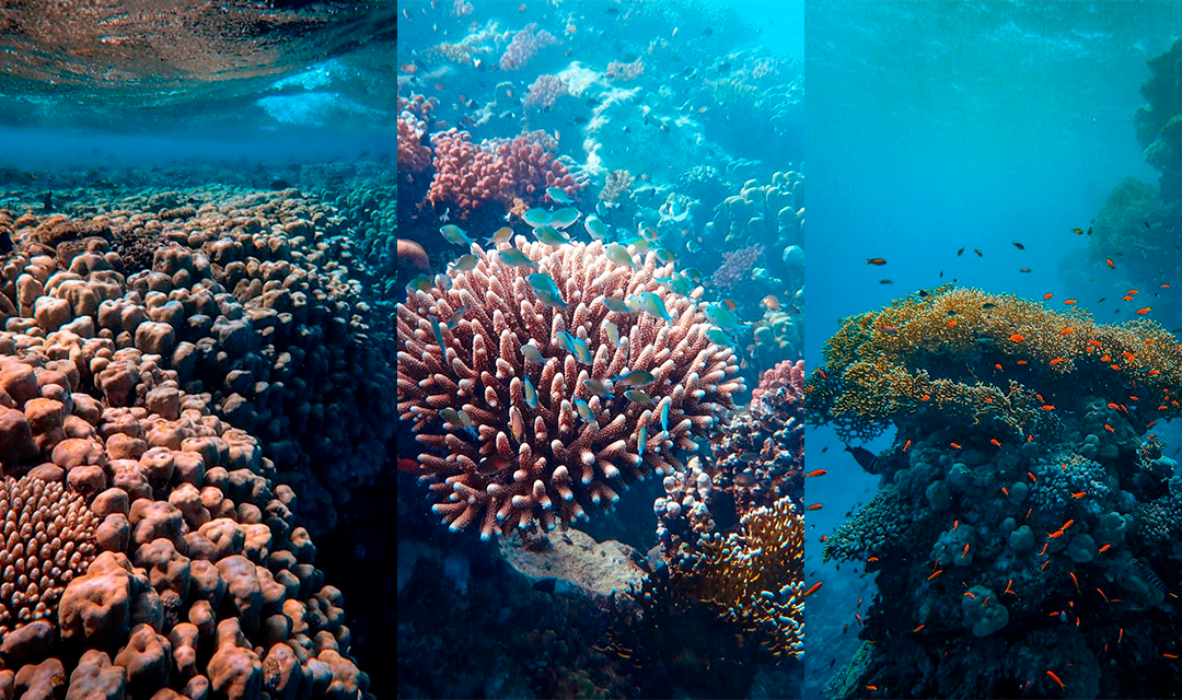 Coral diseases – how they harm our oceans and what to do to protect them
