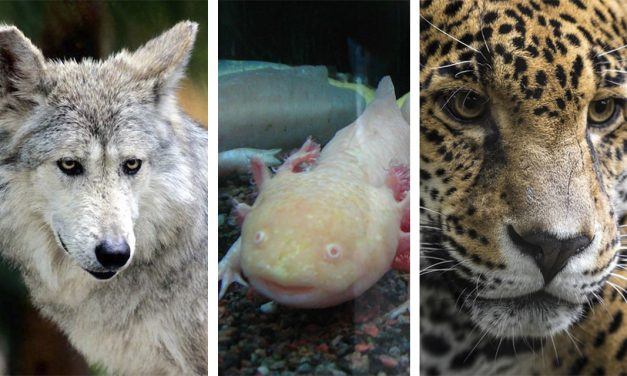 Mexican endangered species you should read about